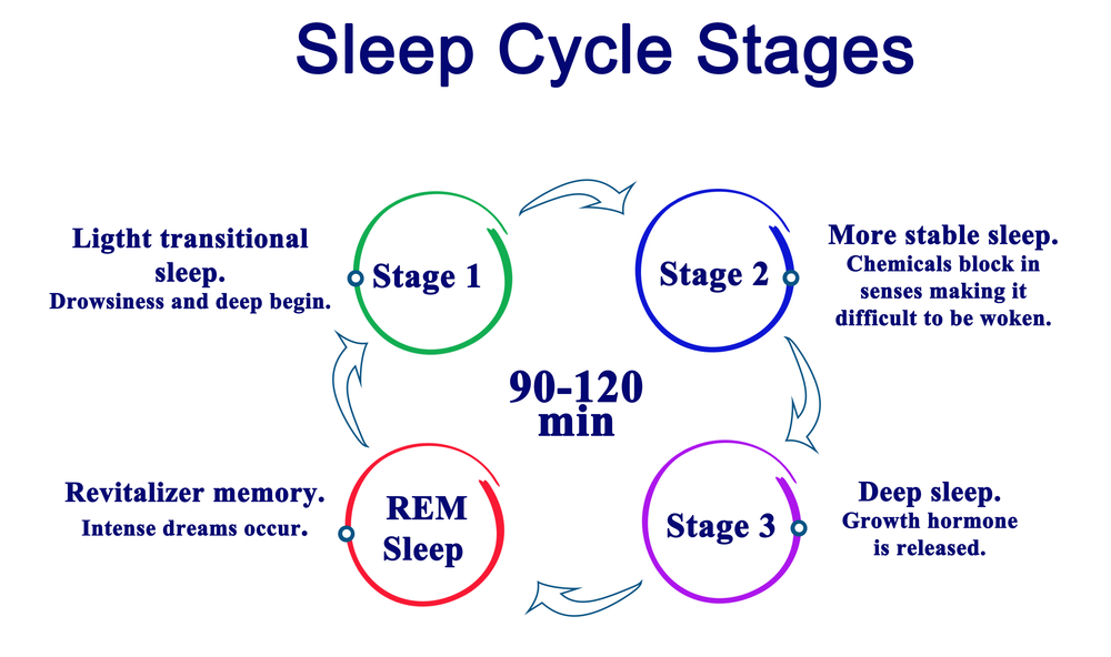 Sleep Cycle Stages